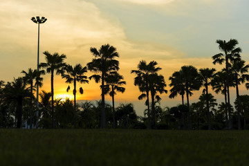 Dark silhouettes of palm trees with sky and sunset