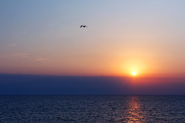 Flying bird on sunset in the sea