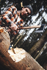 Strong lumberjack swings a sharp ax and is about to cut a big tree in the forest