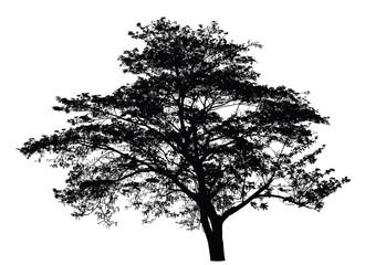 Big tree silhouette : vector