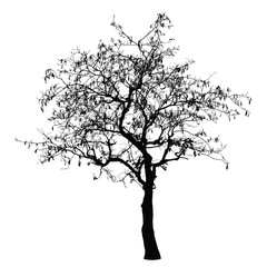 Tree silhouette : Detailed vector