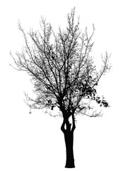 Tree silhouette : Detailed