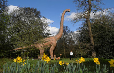 A man views an animatronic life-size dinosaur ahead of an interactive exhibition, Jurassic Kingdom, at Osterley Park in west London, Britain