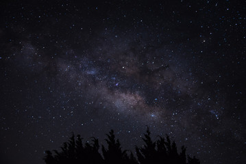 Milky way on top of tree , astrophotography .