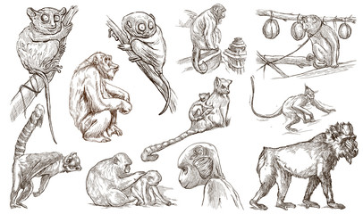 Animals around the World. Monkeys and Apes. An hand drawn full sized pack. Line art.
