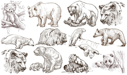 Animals around the World. Bears. An hand drawn full sized pack. Line art.