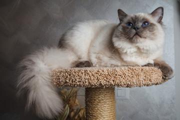 gatto in posa su trespolo
