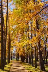 Autumn landscape. Alexandrovsky Park in Pushkin . Autumn 2016.