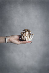 Woman's hand holding shimeji mushrooms