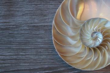 nautilus shell symmetry Fibonacci half cross section spiral background copy space golden ratio structure growth close up ( pompilius nautilus ) stock, photo, photograph, picture, image,