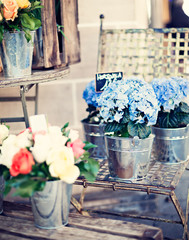 Vintage roses and hortensias in tin buckets