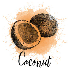 Vector illustration, coconut in hand drawn graphics. Depicted on a orange watercolor background