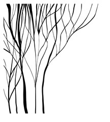 Vector of abstract silhouette of trees without leaves on white background, isolated illustration in black color, high quality