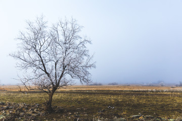 Lone Tree in Winter Landscape