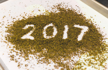 2017 Spelled in Ground Cannabis Buds