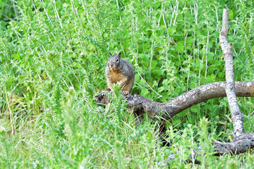 Gopher on the Watch