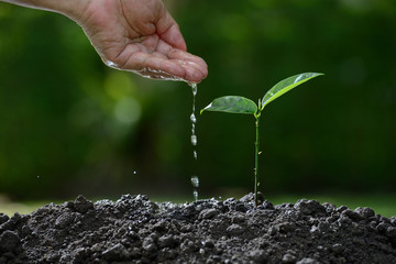 Farmer's hand watering a young plant on nature background