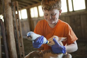 Smiling Caucasian boy feeding bottle to lamb