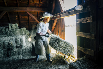 Caucasian farmer in barn pulling bale of hay