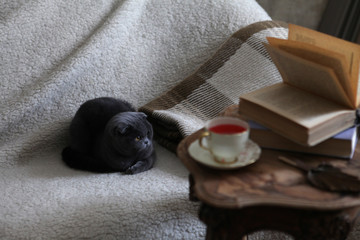 Sweet moments of relaxation with books and a cup of tea. Gray kitten