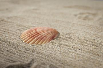 Studio close up of  seashells on a sand. Fine art picture