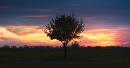 Lonely tree on background of sunset