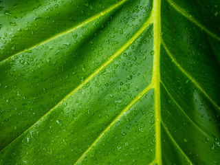 Green leaf texture / leaf texture background / Copy space