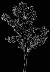 single tree sketch on black background