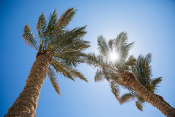 Palm tree and bright sun on blue sky background
