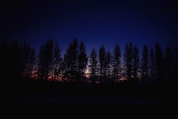 winter night photo