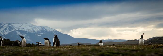 penguins Tierra del Fuego