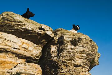Dogs on rocks in Brazil
