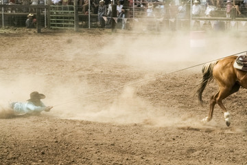 Horse dragging cowboy by rope in rodeo