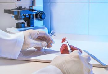 frisches Fleisch wird in einem Labor untersucht