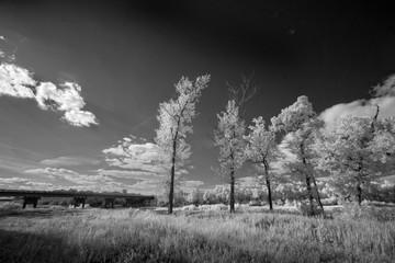 Landscape in infrared light
