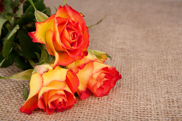 Three red-yellow roses in a top of jute cloth