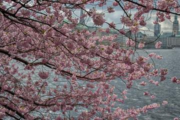 Hamburg Panorama in springtime