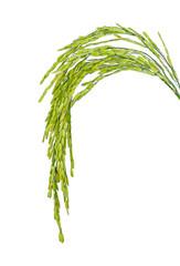 rice isolated onwhite background