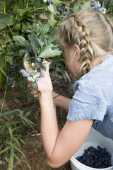 Caucasian girl picking blueberries