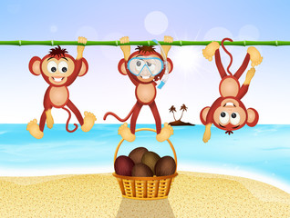 funny monkeys on the beach