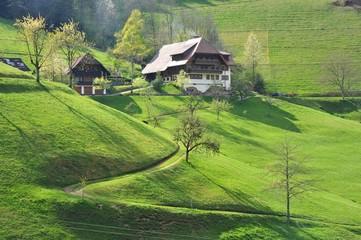 Schwarzwaldbauernhaus am Hang eines grünen Wiesentälchens im Frühling