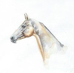 akhal-teke horse portrait watercolor painting