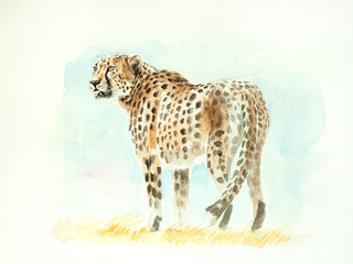 cheetah watercolor painting