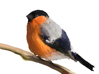 Oil Painting Bullfinch on White Background - Drawing Portrait of Bird
