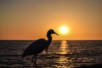 Egret Silhouette on the Oceanside, California Pier
