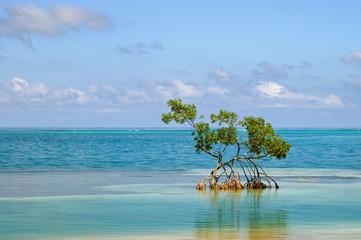 One Mangrove
