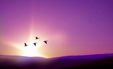 Birds flying against purple landscape in the background