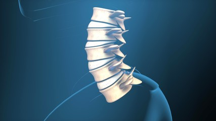 Human Spine x-ray view 3D illustration,