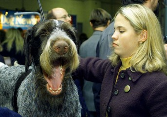 DOG YAWNS WHILE BEING GROOMED AT THE WESTMINSTER DOG SHOW.