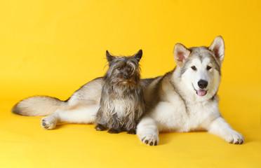 Dog friends take a pic